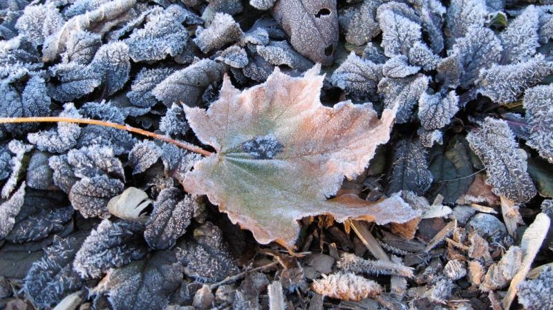 Frost is seen on the ground in Ingersoll, Ont., in this photo from November 2012. (Betty Price / MyNews)