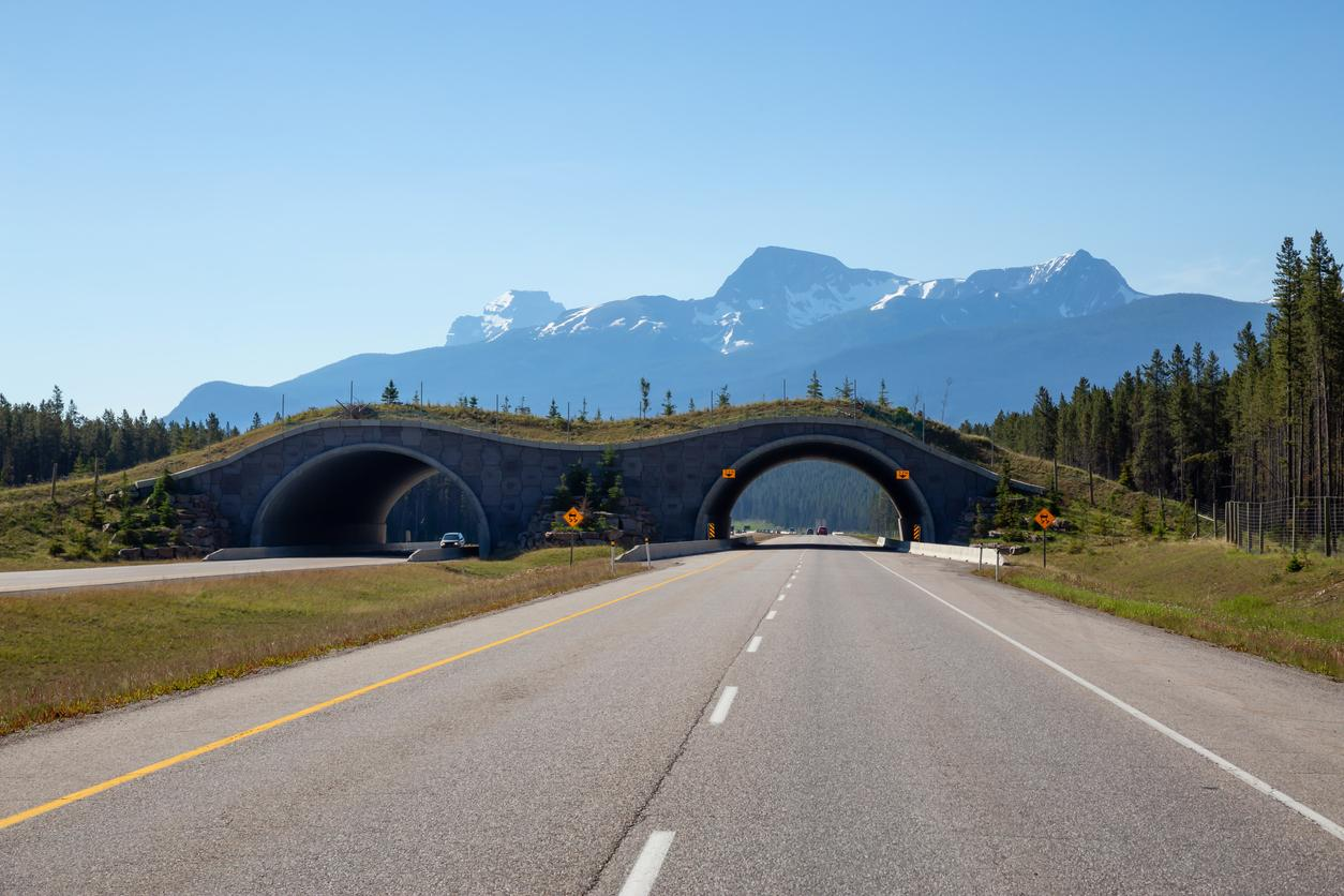 AM800-NEWS-animal-crossing-eco-bridge-Banff