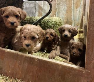 OPP puppies Dec  15