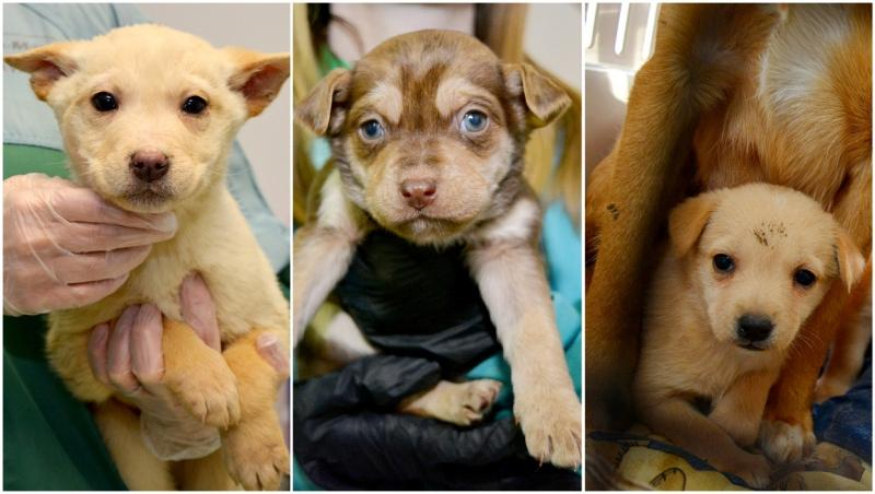 The Alberta Animal Rescue Crew Society is in need of foster homes after taking in 63 animals this week. (Photos courtesy AARCS)