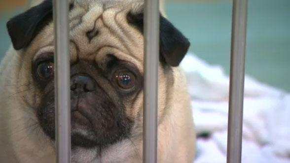 Winnipeg Humane Society Decreases Euthanasia Rate By Nearly 20 Per Cent
