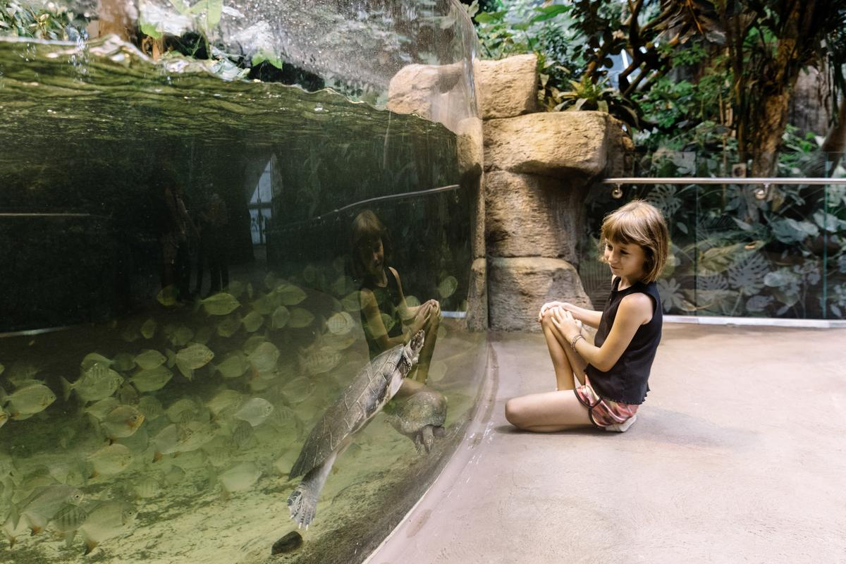 Girl visits turtle at the at the reopened and renovated Biodôme