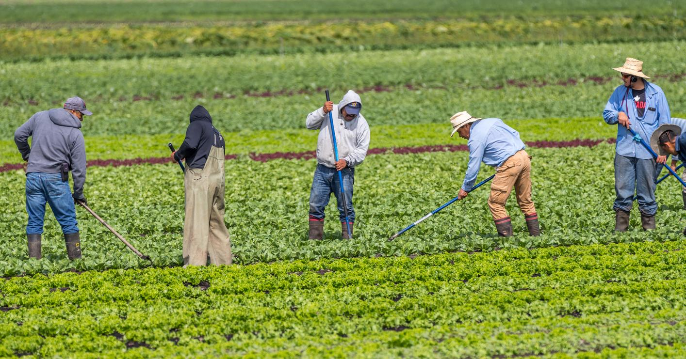 am800-news-migrant-workers-field-istock