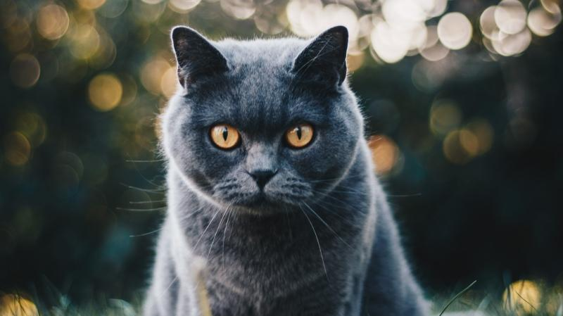 Behavioural biologists at the University of Guelph recently published a paper that confirmed 'cats are quite hard to read.' (Pexels/Kirsten Bühne)
