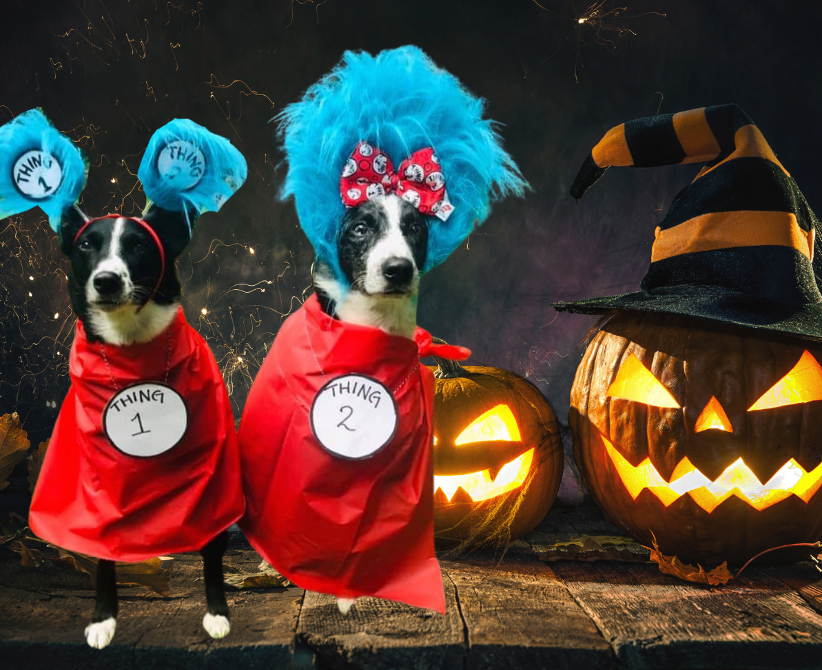The SuperDogs get dressed up for Howl-O-Ween, coming to the Royalmount Drive-in Theatre with two shows on Saturday!