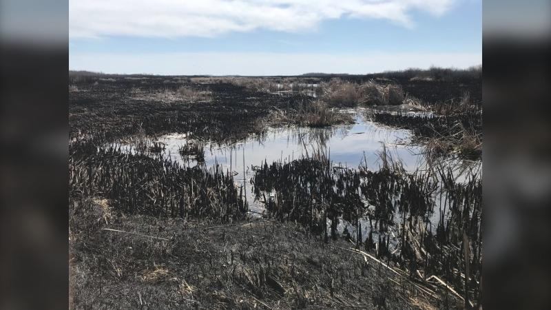 The remnants of a grass fire are seen near Zhoda, Man. on April 6, 2021. Residents in the region are concerned the dry spring will result in a busy wildfire season. (CTV News Photo Josh Crabb)