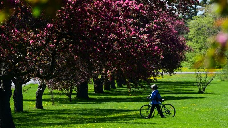 Colourful spring flowers and trees bloom as people visit the arboretum in Ottawa on Wednesday, May 12, 2021. (Sean Kilpatrick/THE CANADIAN PRESS)