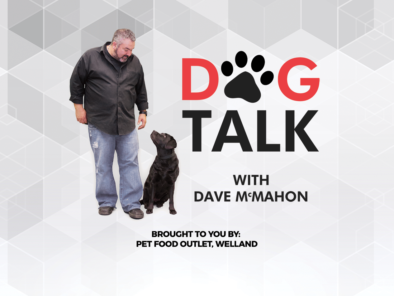 Dog Talk with Dave McMahon