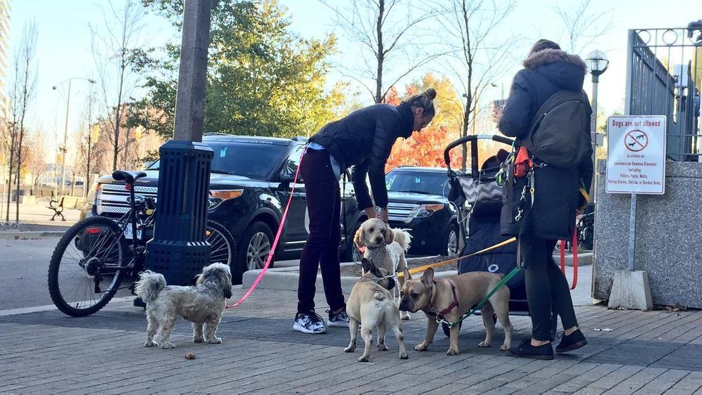 Toronto Dog Walker Van