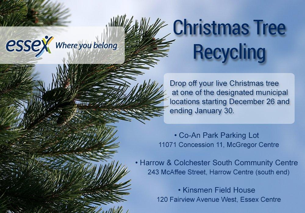 christmas tree drop off begins in essex