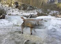 A fox found in a block of ice
