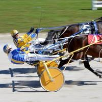 AM800-NEWS-Lakeshore-Horse-Racing
