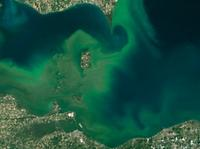 am800-news-algae-bloom-lake-erie-summer-2015
