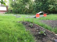 AM800-sandwich-community-garden-3