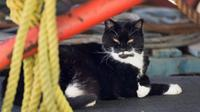 Black Chin, one of the cats under the care of Pierre's Alley Cats Society, rests in the shade at the Halifax Dockyard in Halifax on Monday, June 5, 2017. The organization tends to feral cats that live at several locations at the the DND facility. (THE CANADIAN PRESS/Andrew Vaughan)
