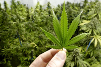 AM800-NEWS-cannabis-marijuana-pot-stock