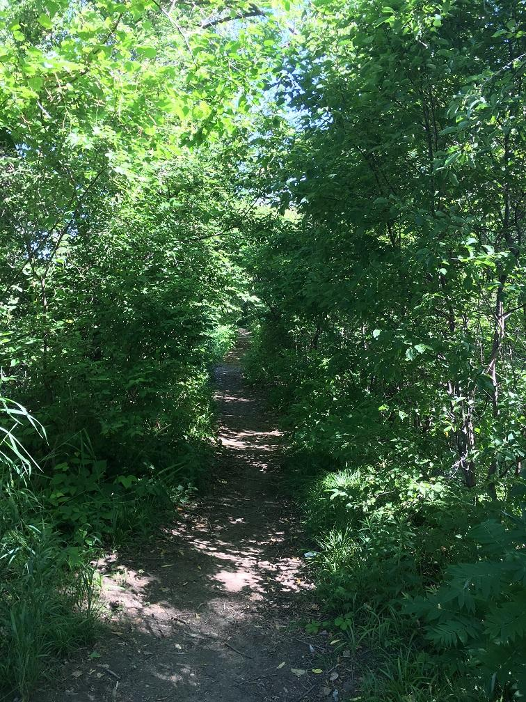 AM800-NEWS-TREES-WOODS-FOREST-PELEE-ISLAND-HIKING-PATH