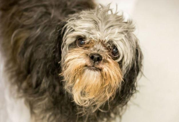 BC SPCA asking for donations to help 9 puppy mill dogs