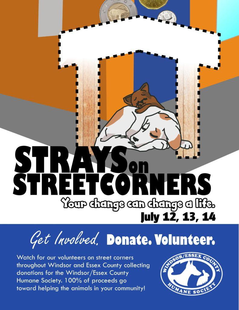 AM800-News-Strays-On-Street-Corners-Poster.jpg