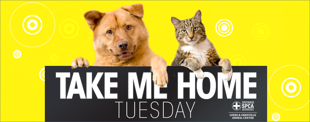 BOB FM Take Me Home Tuesday