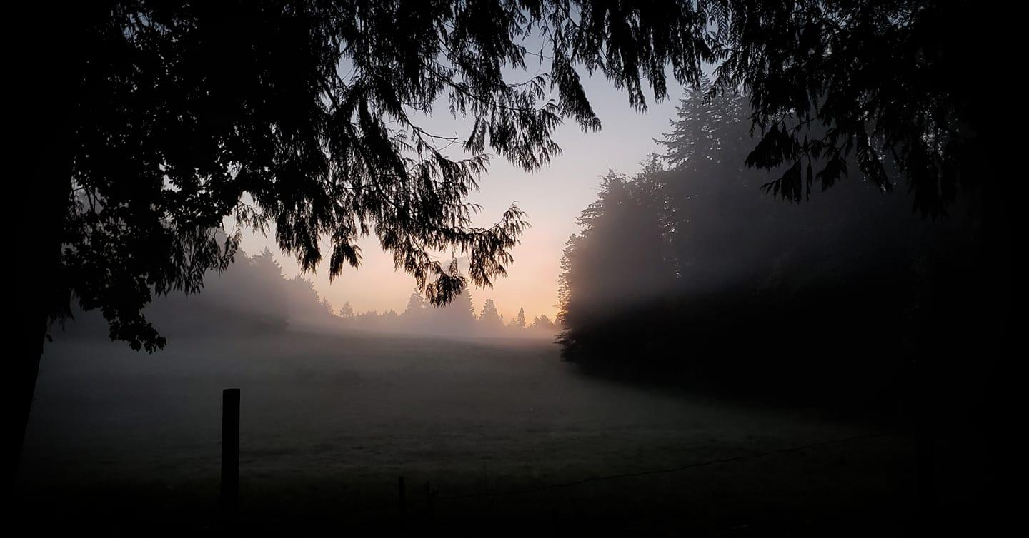 An eerie fog in Saanich at 7 a.m. (Chantel)