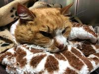 AM800-News-Cat-Abuse-Jan-2019