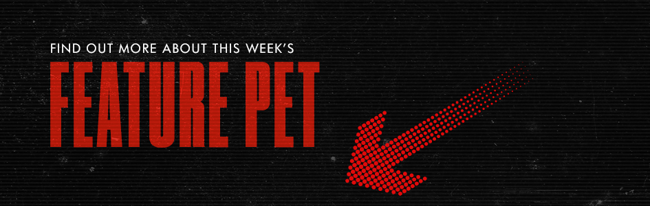 B Mack & Karly's Pet Project Feature Pet Banner Image