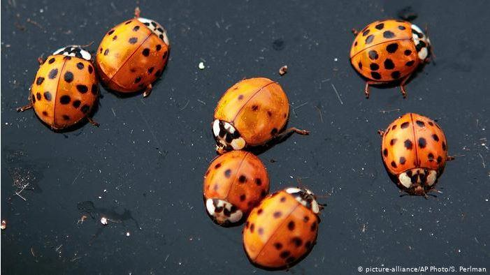 Now THAT'S a swarm of ladybugs!