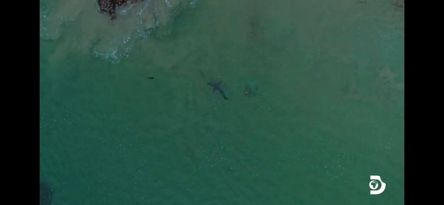 Great white shark hunt