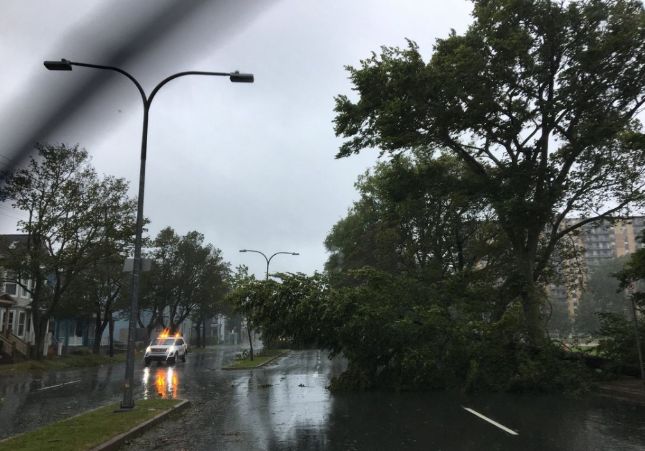 A tree blocks the northbound lane on Robie Street near the corner of Cunard Street in Halifax. The tree was knocked over by high winds from Hurrican Dorian blowing across the Halifax Common. (Todd Battis/CTV Atlantic)