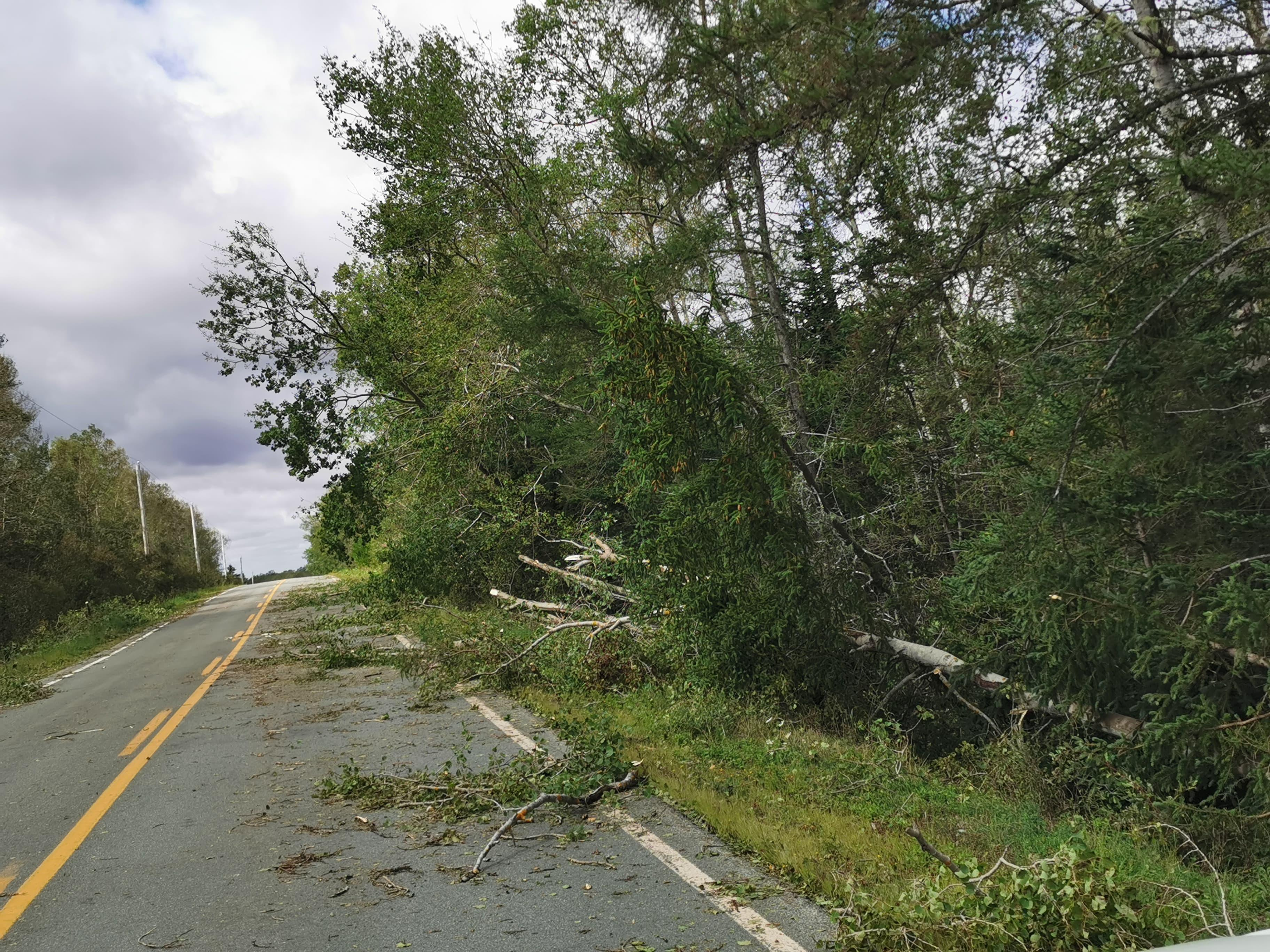 Many trees and branches littered roads across Nova Scotia Sunday morning after Dorian blew through over the weekend (Staff photo)