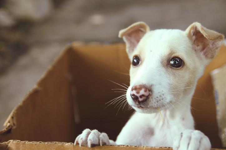 Petsmart To Mark National Pet Adoption Weekend